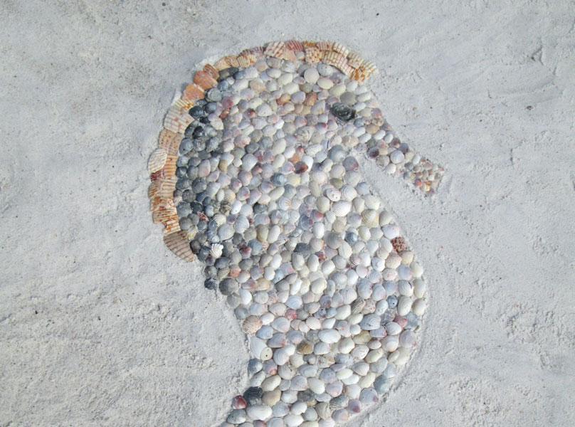 shell-seahorse-f