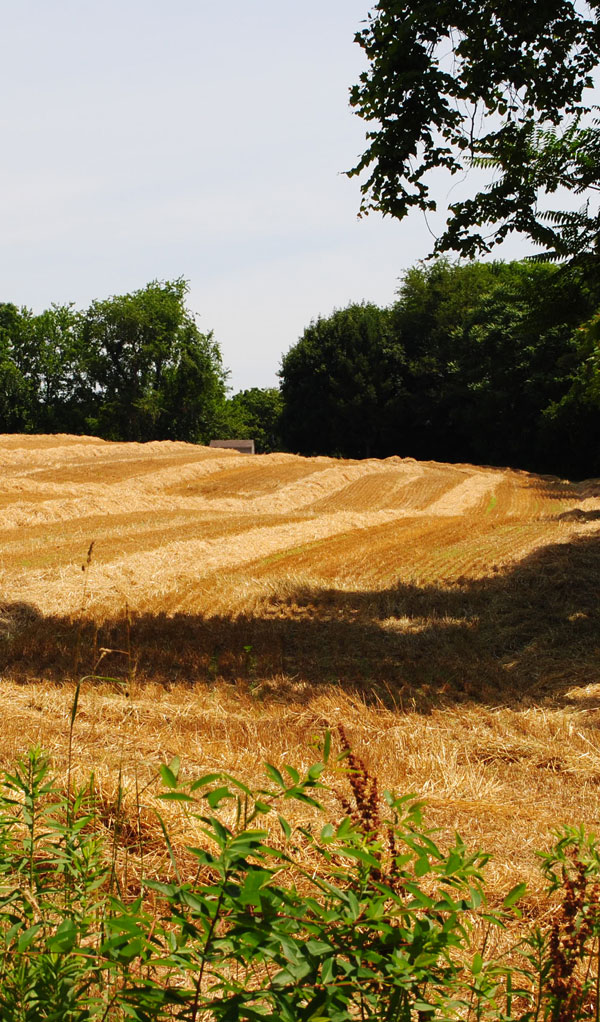harvested-wheat-field-lancaster-pennsyvania