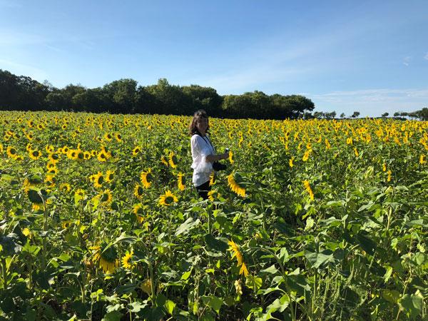sun flower field chicago- creative in chicago